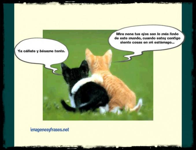 imagenes-chistosas-para-facebook-dos-gatos-enamorados