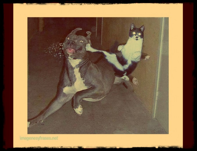 imagenes-chistosas-para-facebook-gato-karateka