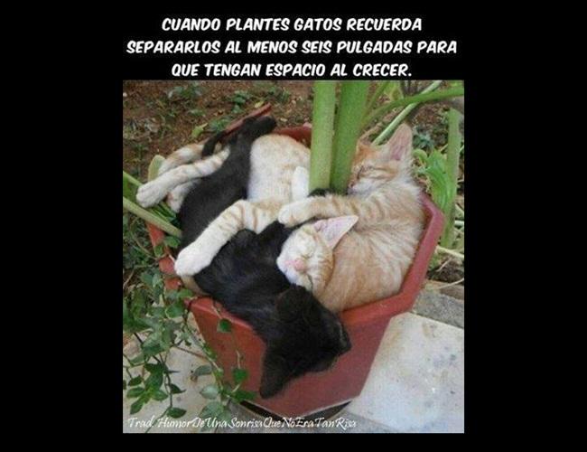 imagenes-chistosas-plantando-gatos