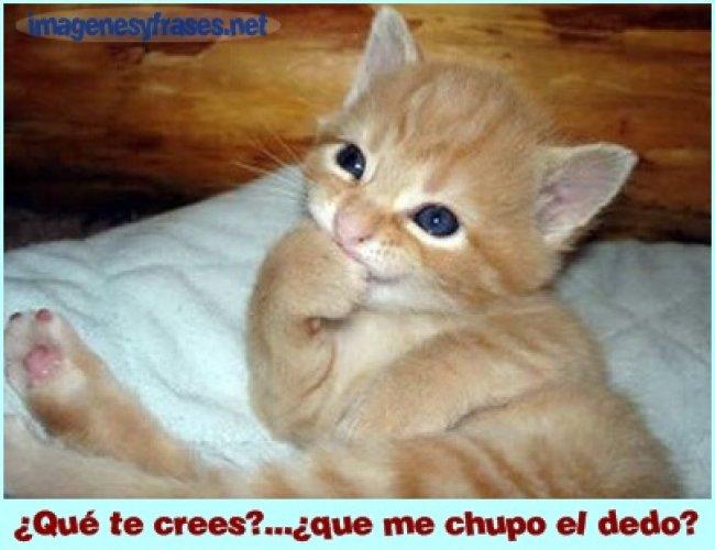 imagenes-con-mensajes-para-facebook-gatito-tierno
