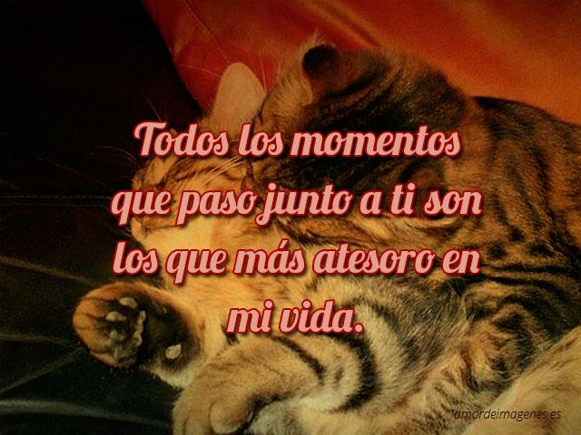 imagenes-de-amor-con-gatitos-para-facebook-abrazados