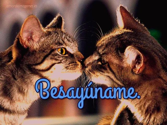 imagenes-de-amor-con-gatitos-para-facebook-besayuname