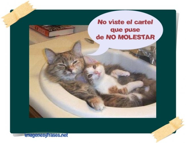 imagenes-y-frases-de-gatos-graciosos