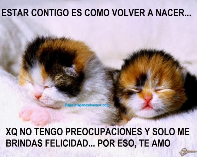 lindos-gatitos