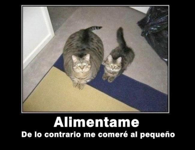 memes-chistosos-gato-gordo