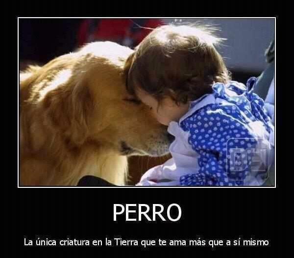 perro-amor