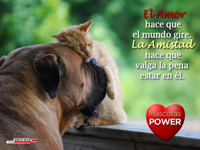 perro-gato-amor-amistad-el-amor-hace-que-el-mundo-gire-la-amistad-hace-que-valga-la-pena-estar-en-el-frases-perros-gatos_mascotaspower_powerultra-pipetas-brouwer