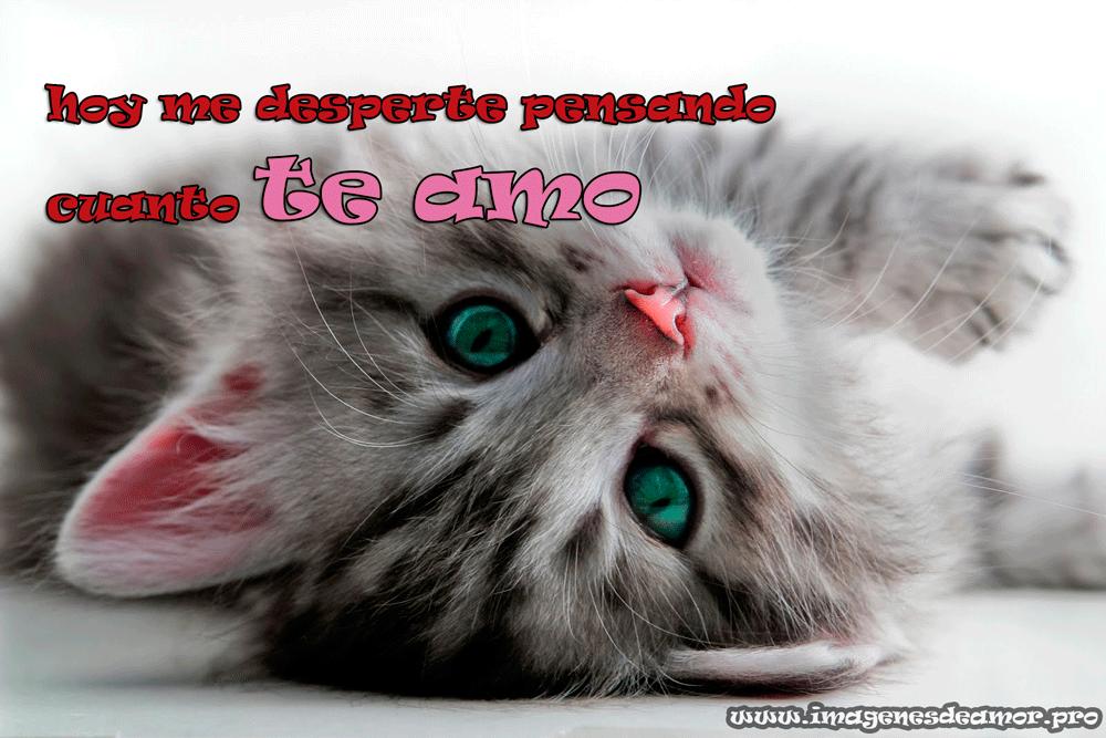 te-amo-gato
