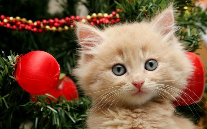 tierno-gatito-jugando-en-arbol-de-navidad-4212