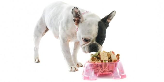 como-elegir-pienso-bulldog-frances-11
