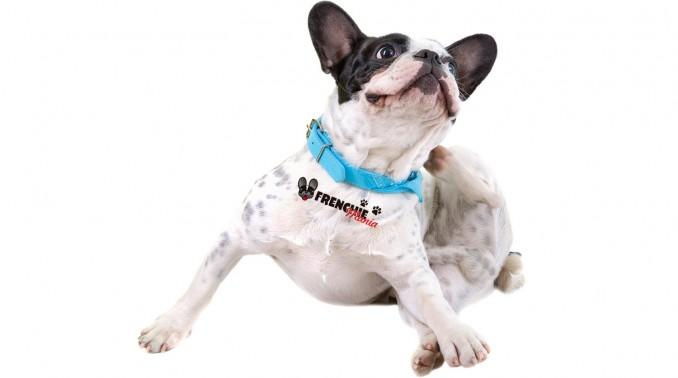 razones-para-no-comprar-bulldog-frances-alergias
